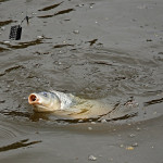 What is the Best Bait for Carp Fishing?