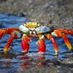 Best Bait for Crabbing 2018