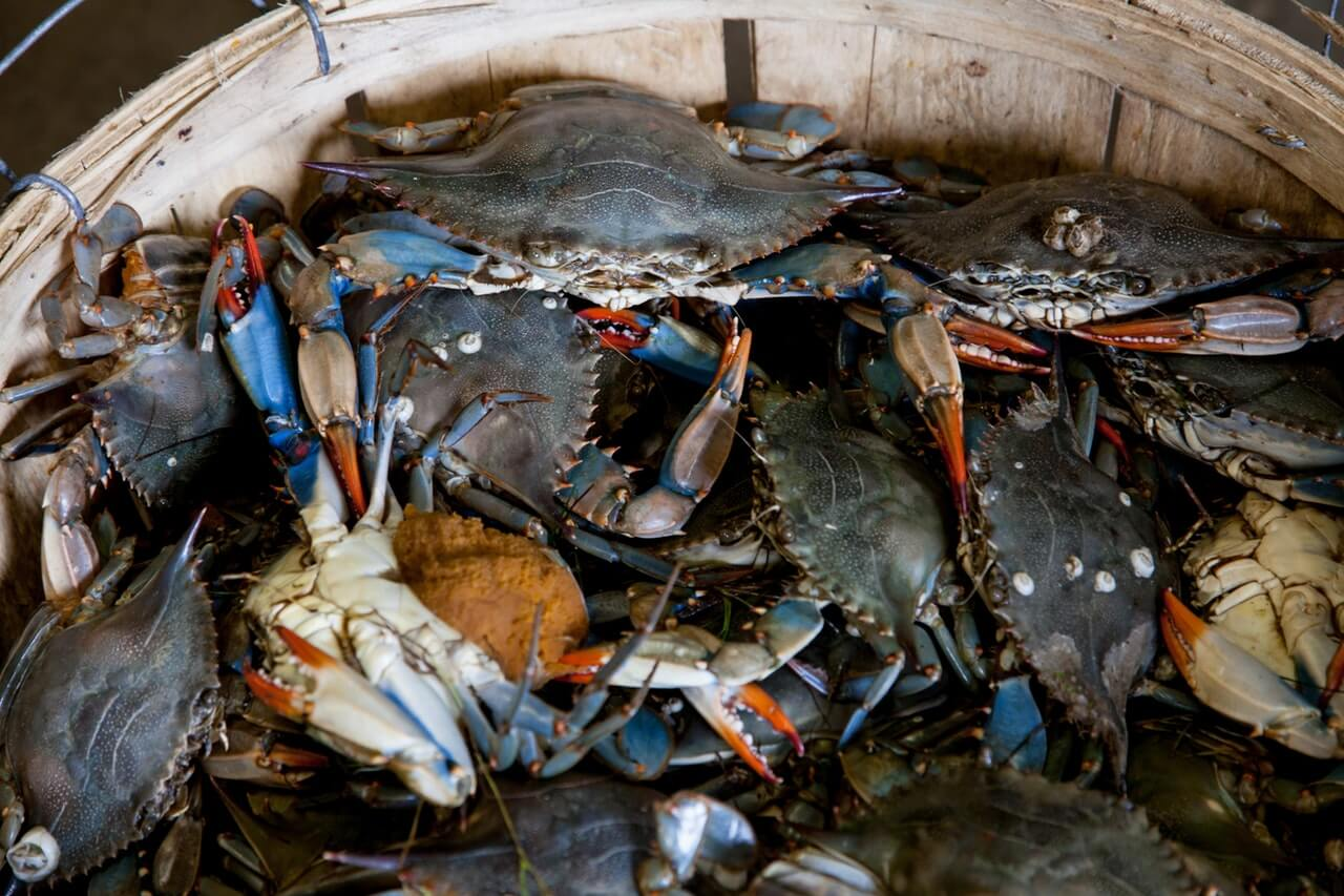 full bucket of gray crabs