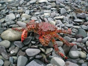 Crabbing techniques and tricks