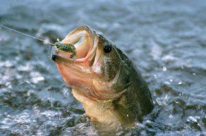 Fishing hacks 10