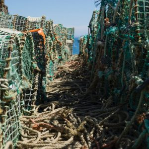 How to Use a Crab Trap – Quick Guide with Trips & Tricks