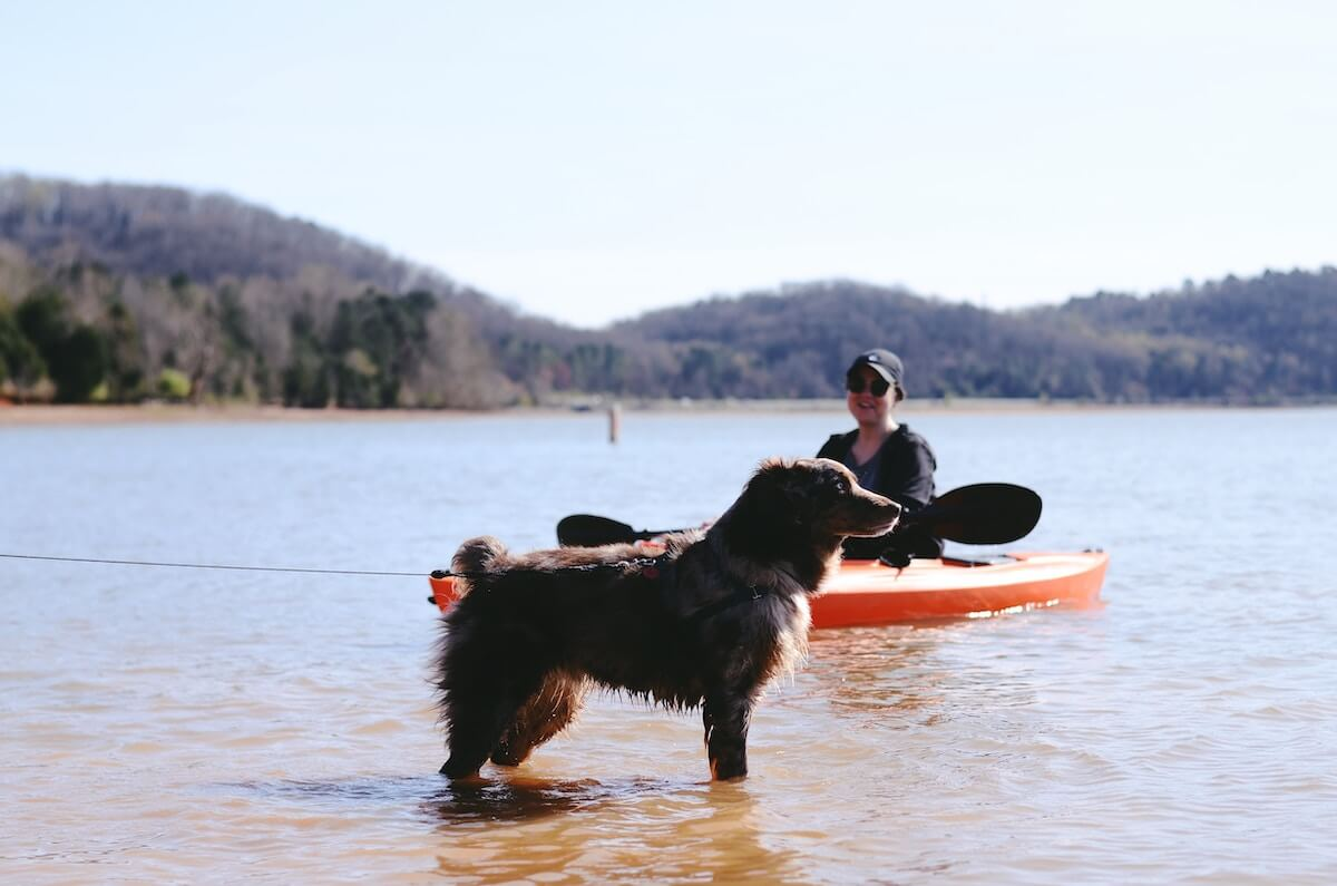 dog by the lake with kayak in water