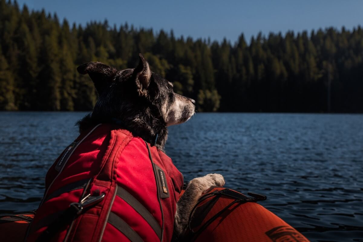 dog in kayak looking over lake